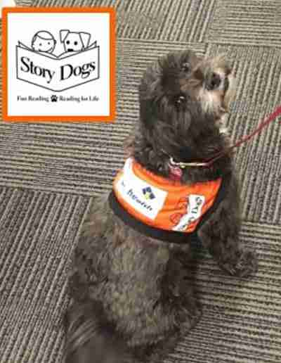 Lilly the story dog works with children at North Mandurah Primary School